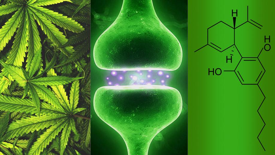 ¿Cuál es la diferencia entre cannabis, cannabinoides y cannabidiol?
